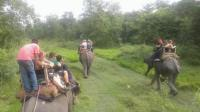 Chitwan National Park Jungle Safari.