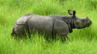 Chitwan Package Tour